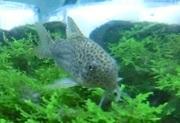 熱帯魚観察日記