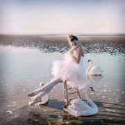 swan classic