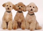 Dog salon & hotel  PARCS horie