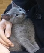 丸顔ニーナと折れ耳ミューの猫成長記