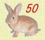 くまきち50代ミセス日記