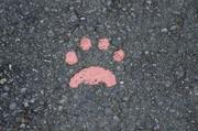 迷い犬・迷い猫情報@沖縄