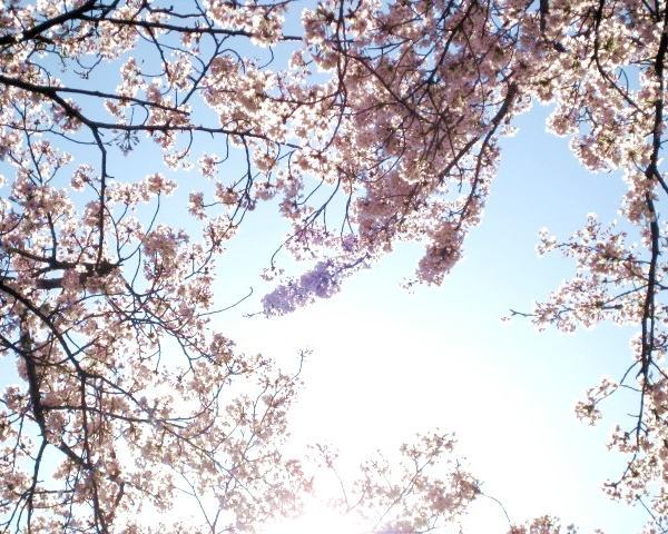 flower raysさんのプロフィール