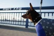 dogark犬の詩