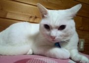 白猫ふわふわ家族の運動会