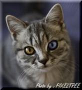 Laylahの猫足イタリア語