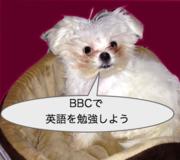 BBCニュースで英語を勉強しよう