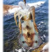 VELMASAのサカナ釣りブログ