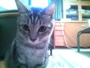愛猫ぶうちゃんと仲間達のブログ