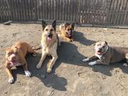 Beach Line Dog