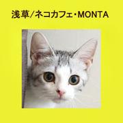 お洒落なネコカフェ・MONTA