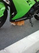 てきとーに行こうよ。バイクで!