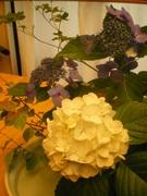 my garden ベランダガーデニング・プライベート日記