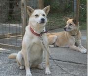 シニア犬の健康法を伝授します@tai