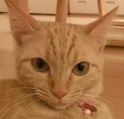 猫好きわーきんぐままの育児にっき