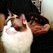 キラパピな生活☆猫のいる家に犬が来た