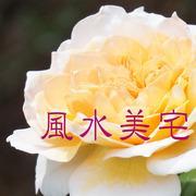 Achikaさんのプロフィール