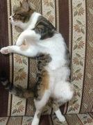 猫とヨルダン生活