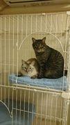 猫に癒される三河のコンサルのブログ