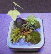 北海道趣味のミニ盆栽 ミニ助