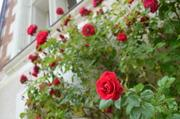 フランススタイルの花 Prairial fleurs