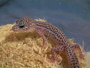 爬虫類飼育記録のブログ。