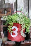 Sugar Pineのガラクタ日記グリーン&DIYの日々