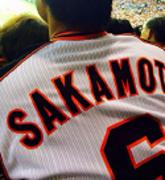 野球女子を全球団制覇するブログ