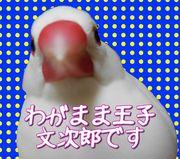 ワンニャンピー別館 白文鳥 文次郎のブログ
