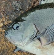 関東釣り情報 ポイントガイドと釣況ガイド