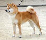 北海道民のてきとうブログ