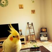 pocoyo's sweet home in australia