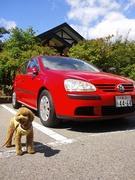 トイプードル、ときどき赤い車。