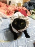 猫とかご飯とか製作物の話