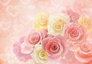 Rose×2(ローズローズ)さんのプロフィール