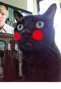 ネコと仕事するさんのプロフィール