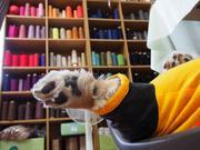 手織り工房MAKOYAのブログ《いぬなひと》