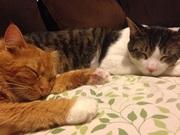 猫兄弟 finn&armaniとアメリカ田舎暮らし