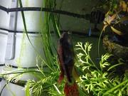 ネオモアイの熱帯魚日記