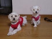 3匹の犬とハムスター