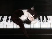 ピアノねこのヒーリングサロン