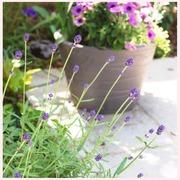 小さな白いテラスの庭