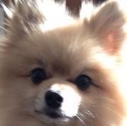 サリアの犬と暮らす節約