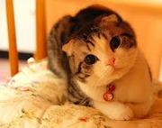 株式投資で猫ハウス♪