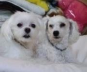 犬のしつけDVD比較レビュー ぱるかいぬブログ