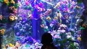 花と小動物に世話されて生きるブログ
