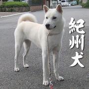 大宮の風(仮)