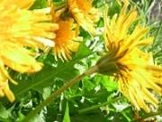 隠岐の島の四季幻想 野の花大好きおばちゃんの徒然