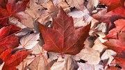 カナダ野生動物日記inエドモントン