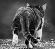 エリオット波動と猫の毒舌
